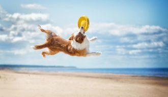 3 đồ chơi cho chó đơn giản nhưng cực kỳ có lợi cho thú cưng