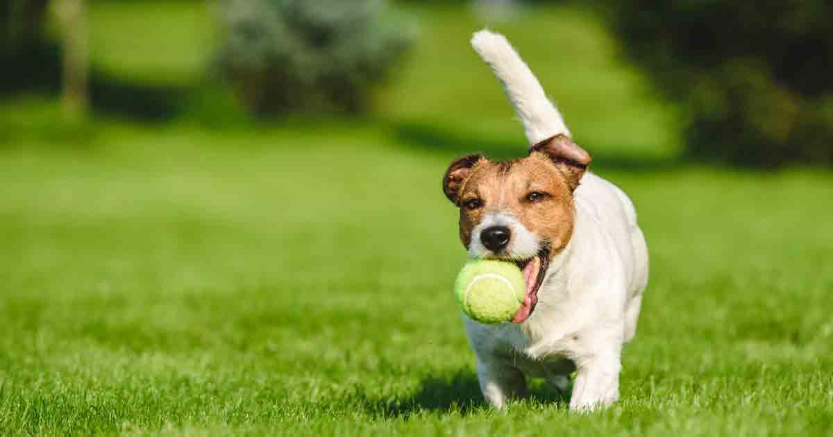 Lợi ích khi mua đồ chơi cho chó