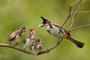 5 yếu tố vô cùng quan trọng khi nuôi chim cảnh mini