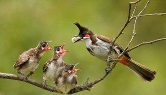 Các yếu tố vô cùng quan trọng khi nuôi chim cảnh mini