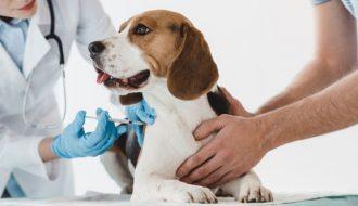 Bác sĩ thú y hướng dẫn cách tiêm cho chó tại nhà cực đơn giản