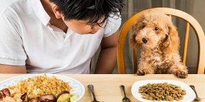 Dinh dưỡng cho chó cưng – như thế nào là hợp lý?