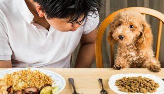 Bật mí chế độ dinh dưỡng cho chó phát triển khỏe mạnh và mau lớn