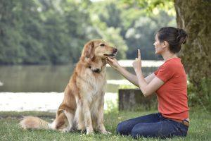Bí kíp 101 cách huấn luyện chó A - Z
