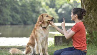 Bí kíp huấn luyện chó siêu đơn giản tại nhà nhưng hiệu quả nhanh chóng
