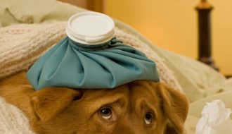 Cách chăm sóc và bí quyết chữa trị chó bị bệnh Care hiệu quả