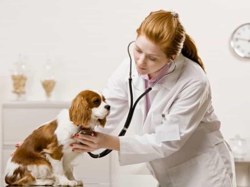 Cách chữa trị hiệu quả một số bệnh thường gặp ở chó con