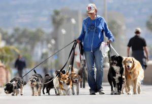 Tầm quan trọng của việc dắt chó đi dạo