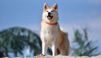 Danh sách 4 loài chó trung thành với chủ nhân nhất thế giới