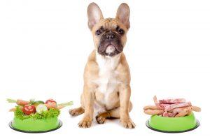 Top 10 thức ăn cho chó nhiều dinh dưỡng