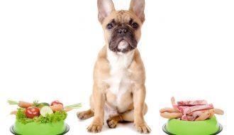 Điểm danh những thực phẩm tuyệt đối không phải là thức ăn cho chó