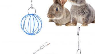 Đồ chơi cho thỏ - Lưu ý quan trọng khi chăm sóc thỏ
