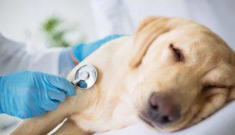 Gợi ý cách chăm sóc chó cảnh phù hợp theo từng loại ở Việt Nam