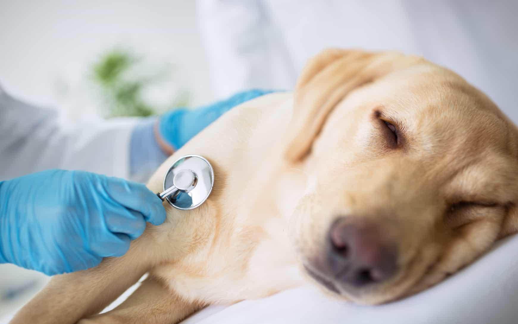 Cách chăm sóc chó cưng không thể bỏ qua