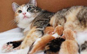 Hướng dẫn bạn cách chăm sóc mèo con 1 tháng tuổi đúng cách từ A-Z