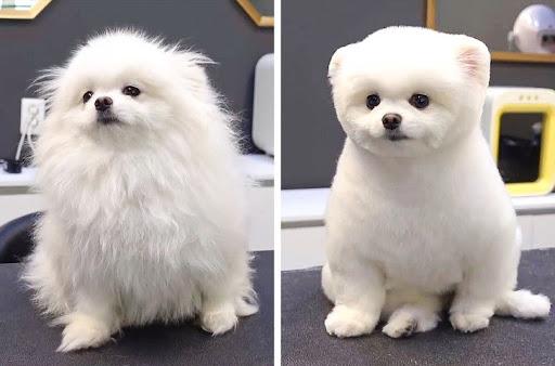 Chuẩn bị trước khi tỉa lông cho thú cưng