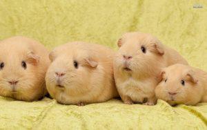 Trông những chú Bọ Ú này có đáng yêu không?