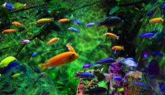 Kinh nghiệm nuôi cá cảnh thành công dành cho người mới bắt đầu kinh doanh