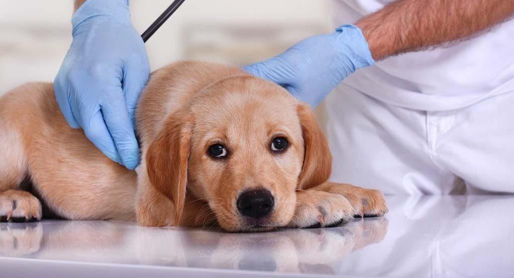 Làm cách nào để có thể điều trị được cho chó bị nôn ra máu?