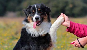 Làm thế nào để chủ nuôi nhận biết chó khôn ngoan và thông minh?