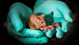 Mách bạn cách chăm sóc Hamster sinh con đúng cách