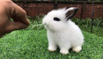 Mách nhỏ cho các bạn về cách chăm sóc thỏ cảnh - loài thú cưng vô cùng đáng yêu