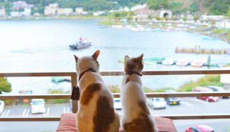 Mèo cảnh say xe, không còn là nỗi lo! Đọc ngay bài viết này để tìm hiểu