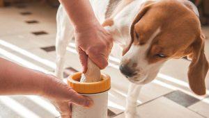 Cách trị mùi hôi chân cho chó dứt điểm tại nhà