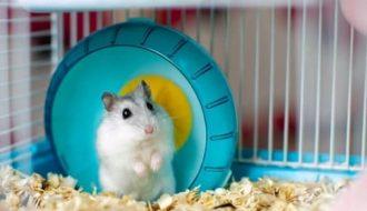 Mô hình nuôi chuột Hamster hiệu quả cho người mới bắt đầu