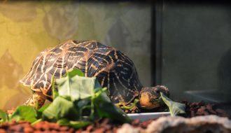 Những điều cần lưu ý khi tiến hành nuôi rùa cầm cảnh