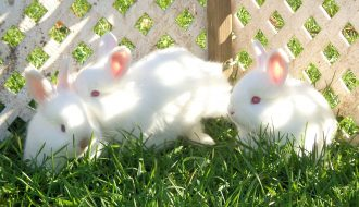 Những vấn đề cần chú ý khi chăm sóc thỏ thú cưng