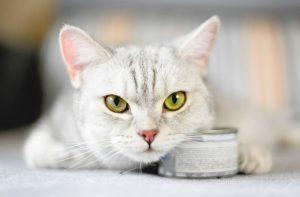 Pate có lợi ích gì với mèo? Cách để có pate ngon cho mèo của bạn