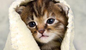 Phương pháp chữa trị mèo bị cảm lạnh mau chóng khỏi bệnh