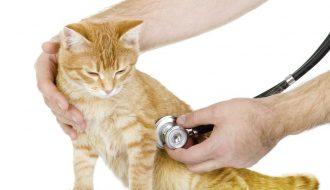 Phương pháp điều trị, chăm sóc mèo bị suy thận hiệu quả