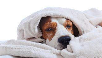 Phương pháp hay giúp việc trị chó bị nôn mửa nhanh chóng