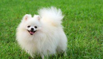 Sử dụng liệu pháp tự nhiên Onnetsu để chữa bệnh cho chó