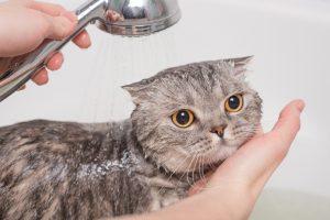 Tắm cho mèo chưa bao giờ lại dễ dàng đến thế, bạn đã biết?