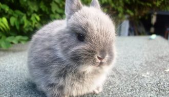 Phát hiện những loại thảo mộc siêu tốt cho thỏ cưng nhà bạn