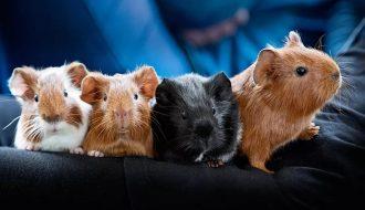 Chuột Hamster đẻ - Những điều bạn không thể bỏ qua